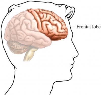frontal_lobe